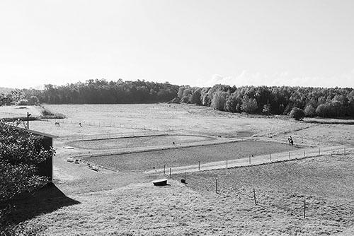 hagensridcenter-utsiktpaddockhagar-sv500x334